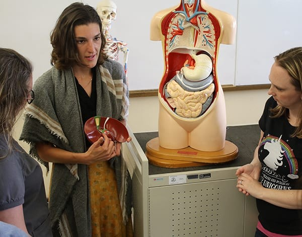 Two students watching their instructor explain the human digestive system a plastic model