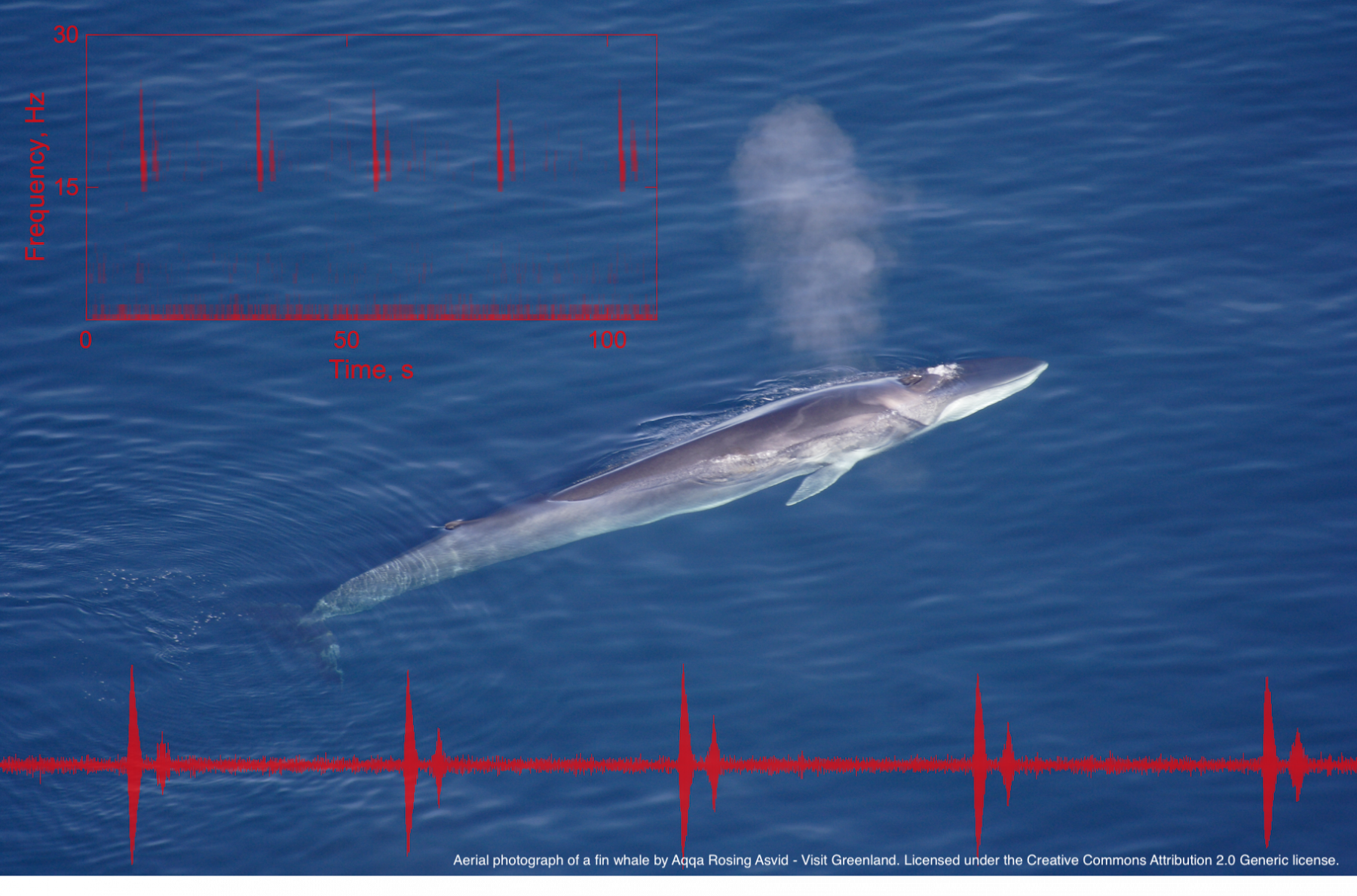 aerial photo of a whale spouting